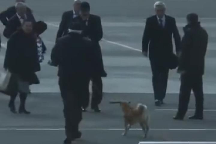 Руководителя Дагестана около трапа самолета встретил «Хатико»