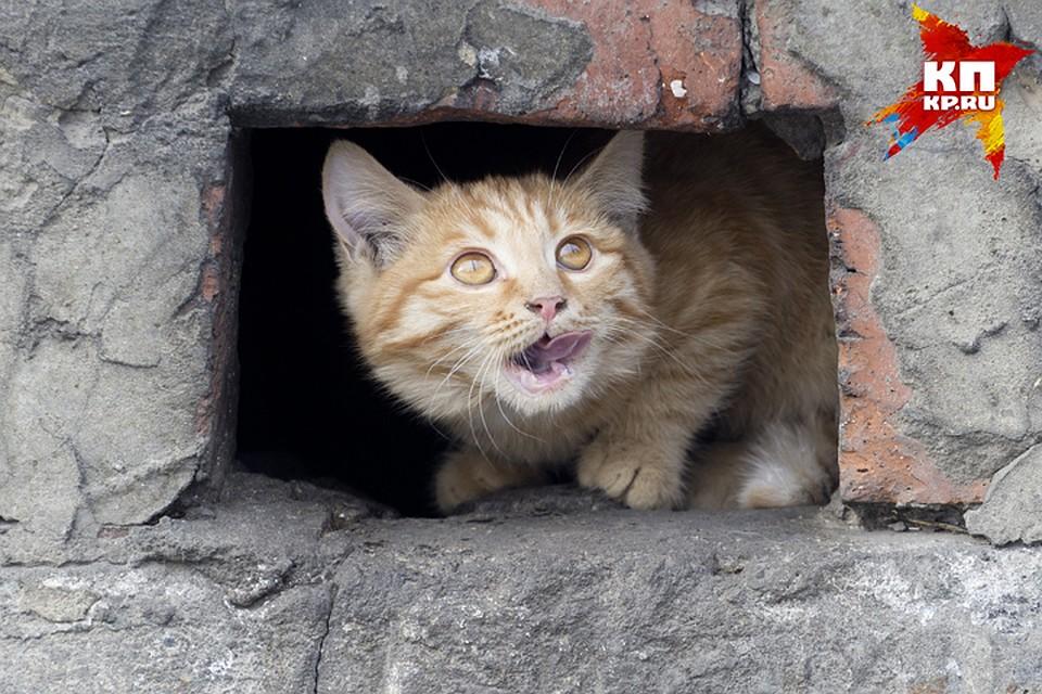 Насуражанку напал бешеный кот