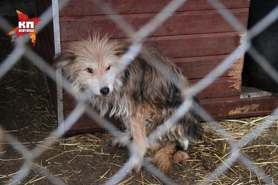 Нижегородский облсуд направил административное дело о«концлагере» для собак нановое рассмотрение