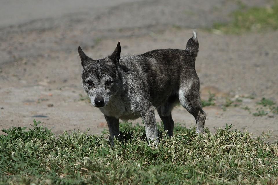 ВМахачкале бродячие собаки напали навосьмилетнего ребенка
