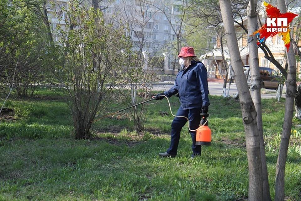 Занеделю вТомской области клещи покусали 2,7 тыс человек