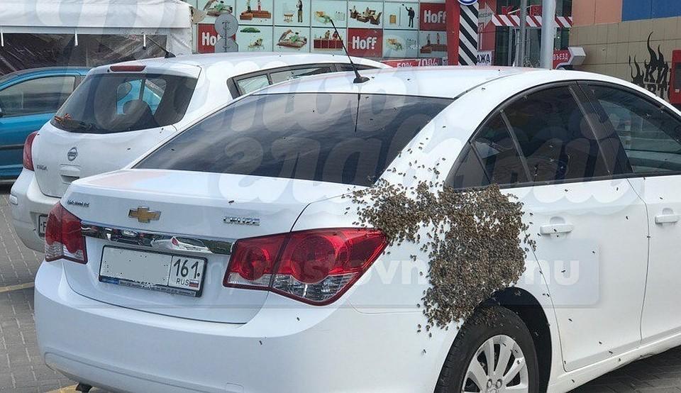 ВРостове настоянкеTЦ «Горизонт» рой пчел атаковал иномарку