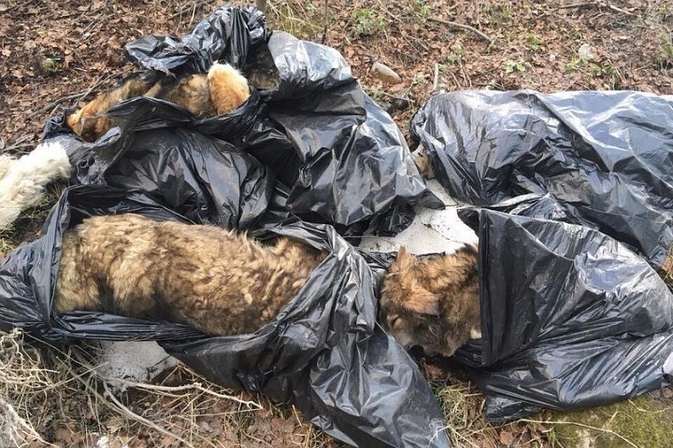 ВМурманске снова обнаружили трупы 7-ми собак