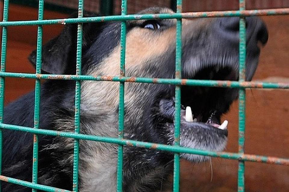 Хозяин собаки, которая покусала ребенка вКемерове, заплатит 50 000 руб.