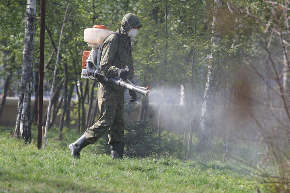 Иксодовые клещи выявлены в восьми зонах отдыха Минска