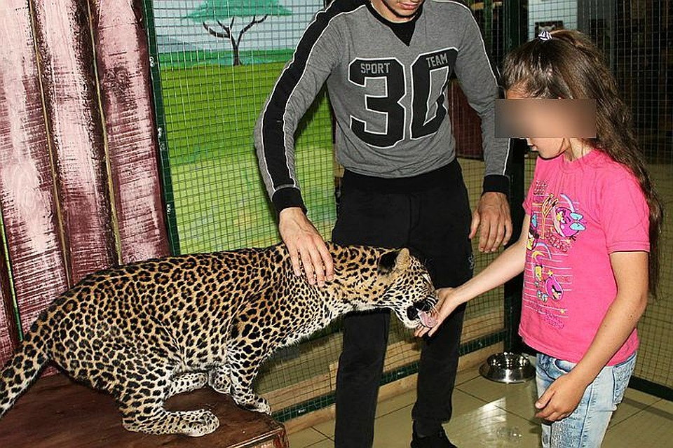 СКвозбудил дело после нападения леопарда наребёнка вконтактном зоопарке Саратова