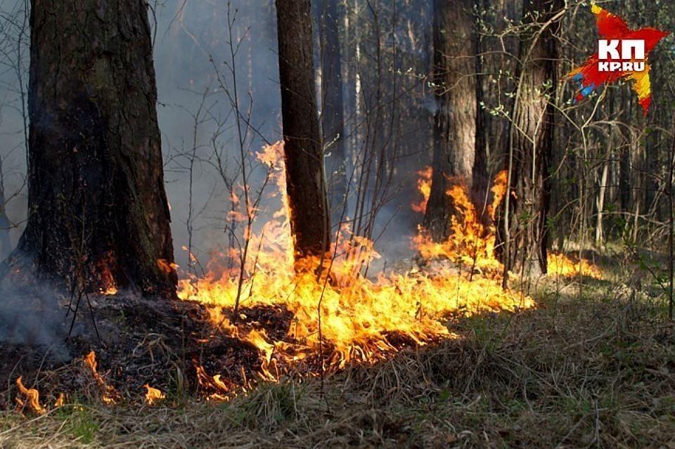 Вред отлесных пожаров в Российской Федерации снизился втри раза