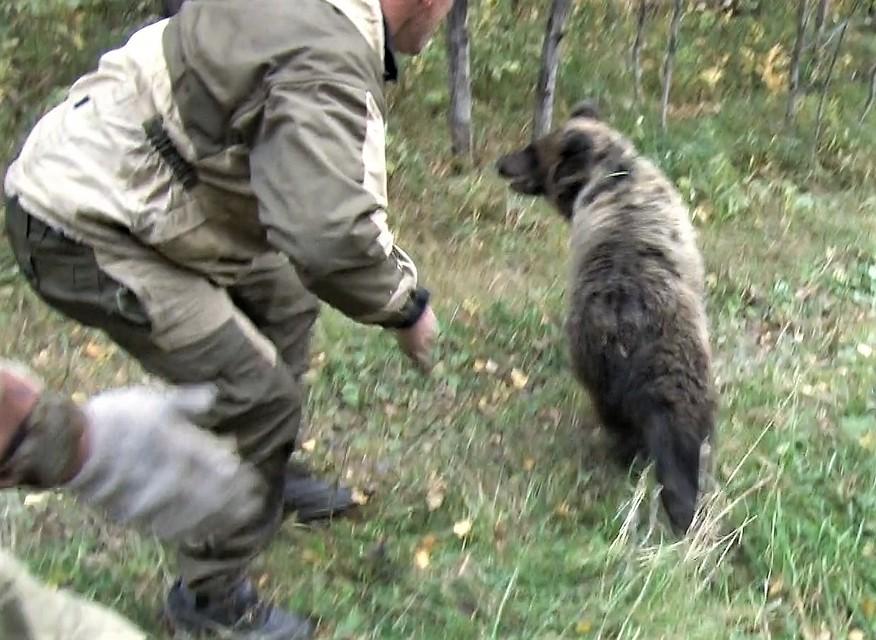 Медвежонок забрел впоселок Красный Углекоп вКузбассе