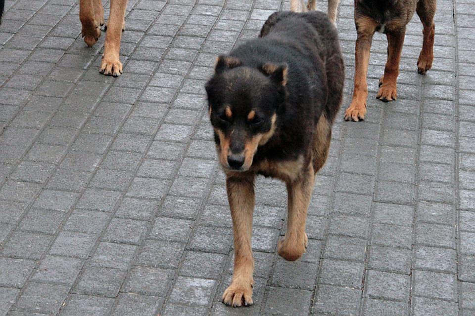 ВИркутске ощенилась бездомная собачка , подокументам считавшаяся стерилизованной иумершей