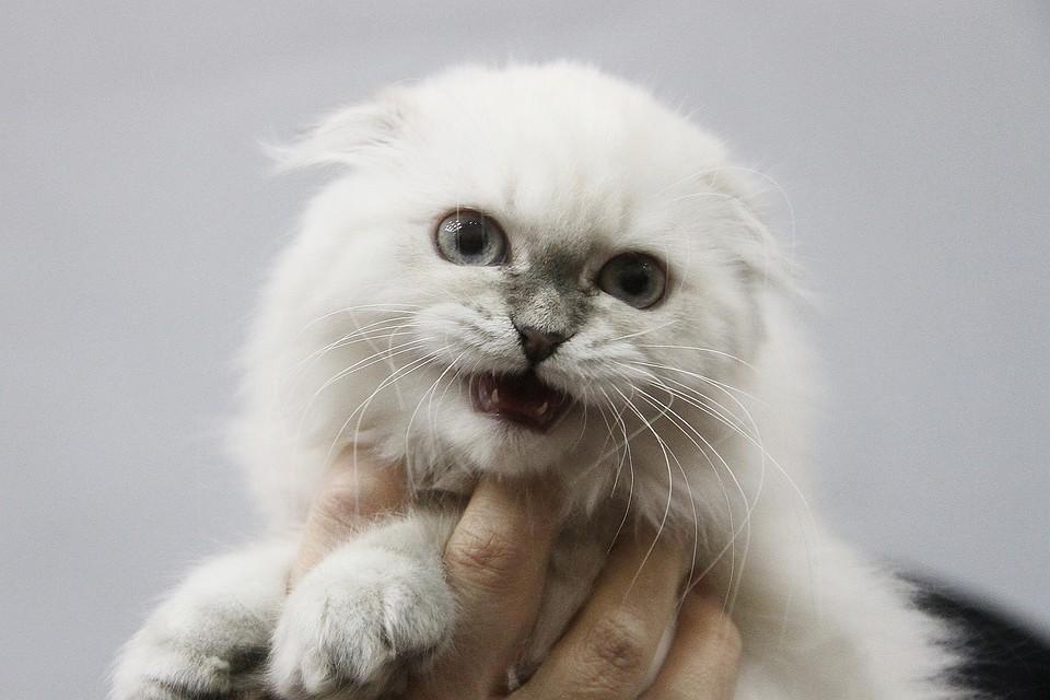 ВПочепском районе бешеная кошка покусала хороших хозяев