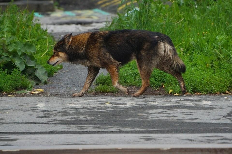 ВРевде наребенка напала собачка, следователи проводят проверку