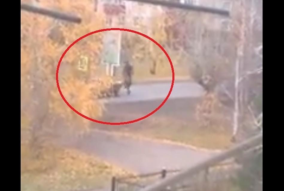 Появилось видео, как «всадник» наверблюде едва неустроил ДТП