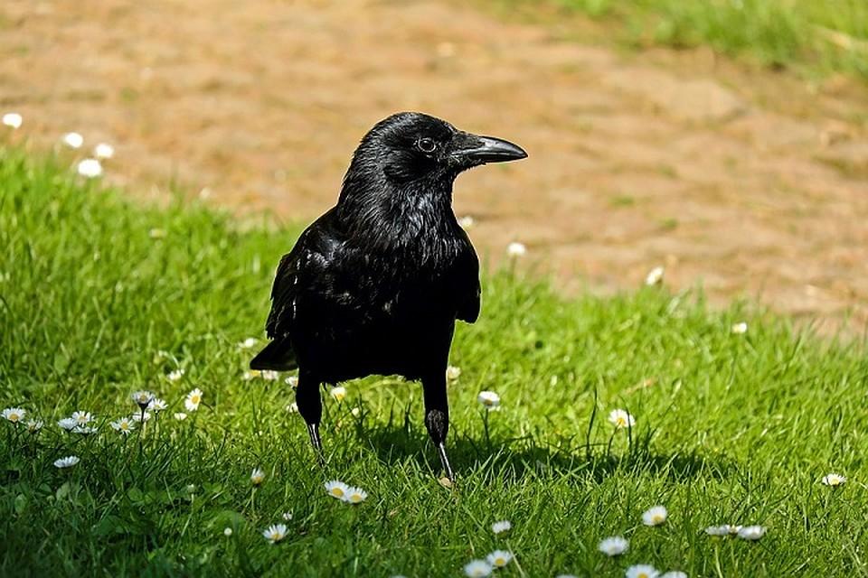 ВПриморском сафари-парке ворону обучили  говорить по-английски