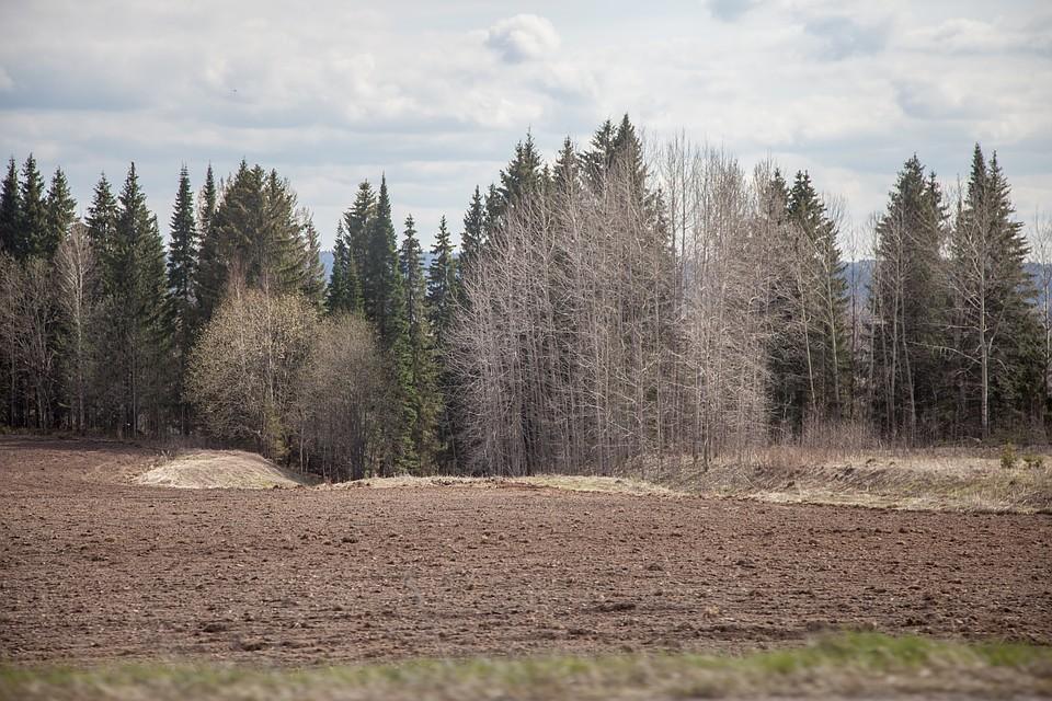 ВПерми усилили режим охраны городских лесов