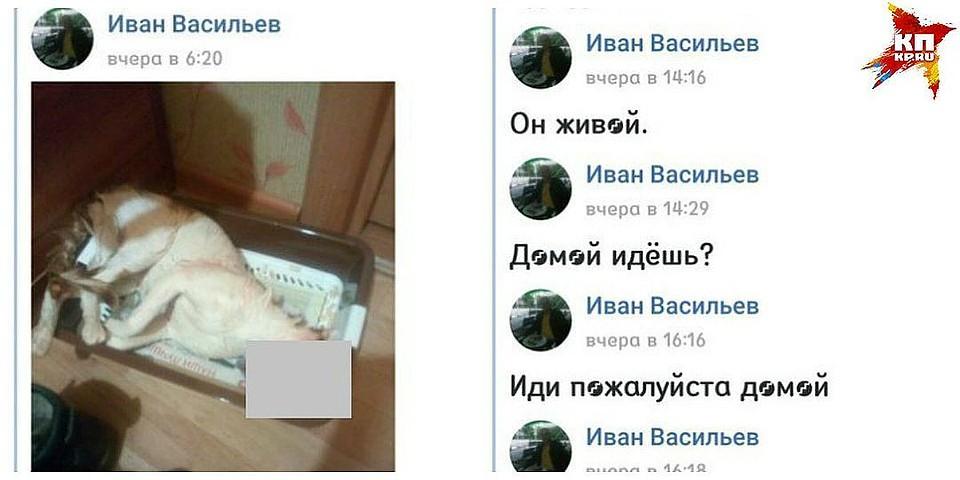 Гражданин Ухты пойдет под суд из-за погибели кота встиральной машине