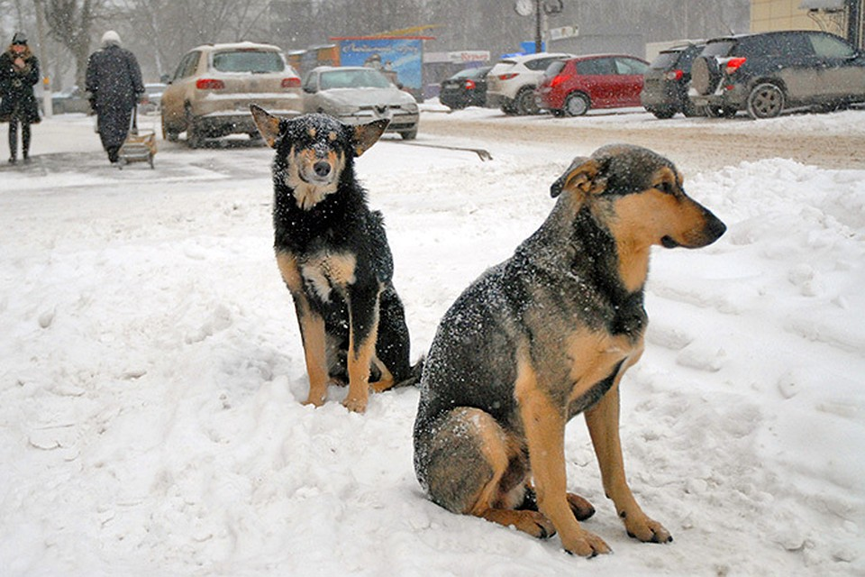 Вглавном парке Омска бродячая собачка напала наребенка