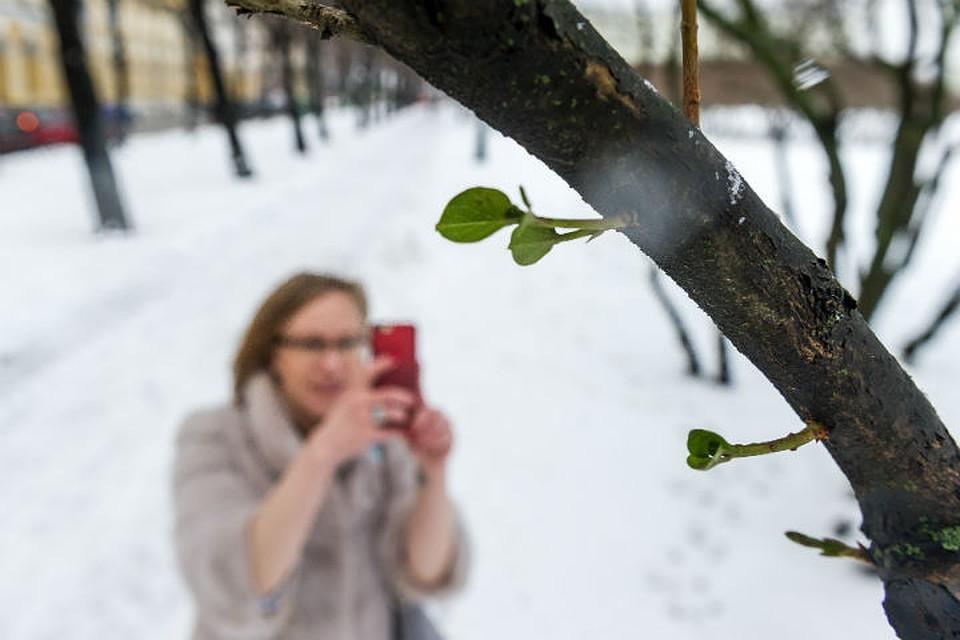 Главный синоптик Петербурга призвал ожидать «привычную оттепель»