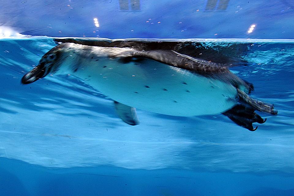 Ученые обнаружили вАнтарктиде «страну» пингвинов— Полтора млн