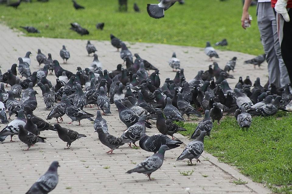 ВПетербург возвращаются скворцы, чибисы, зяблики и иные перелетные птицы