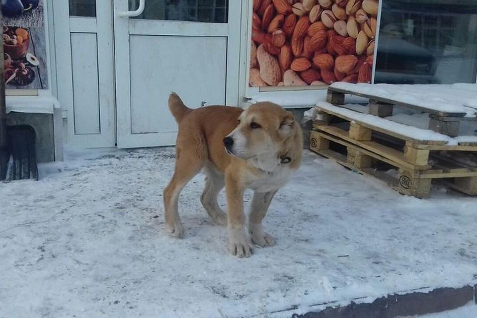 Породистого пса украли на рынке в Кемерове