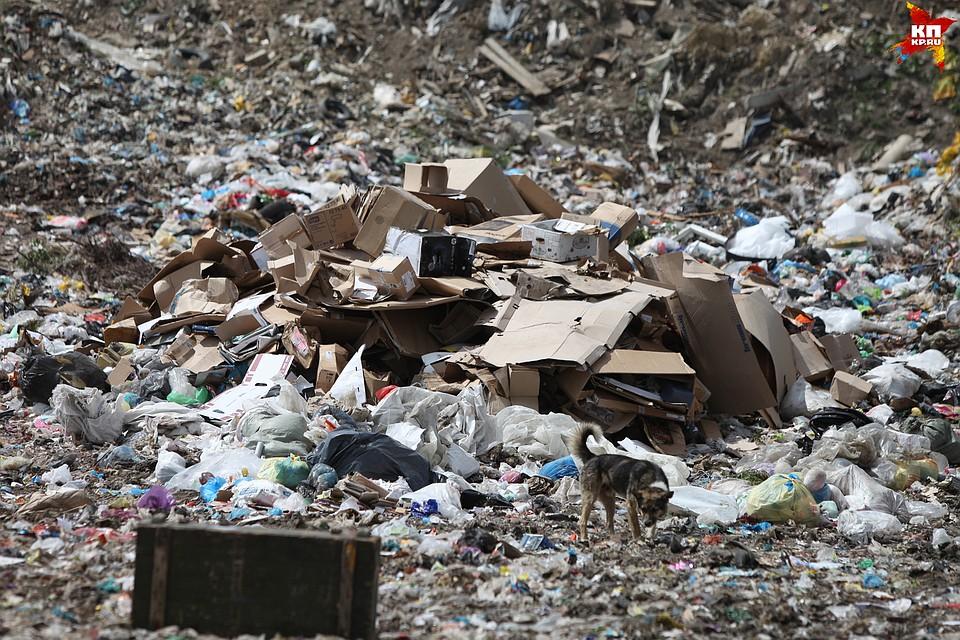 Подмосковье, Свердловская область иТатарстан лидируют врейтинге попереработке пластика