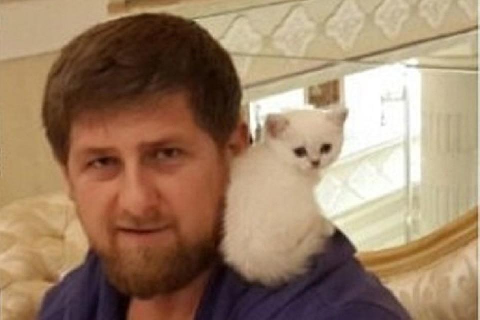 Стране нужна программа профилактики против издевательств над животными— Рамзан Кадыров