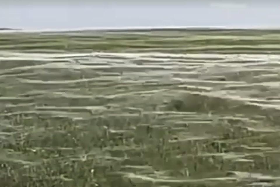 Часть побережья вГреции покрылась густой паутиной