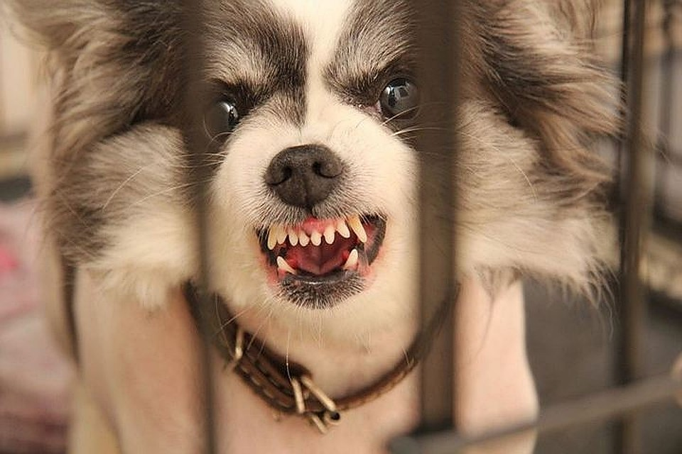 Сам щенок позже умер от бешенства
