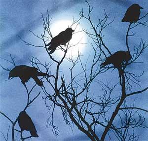 Лунный свет воронам спать не мешает.
