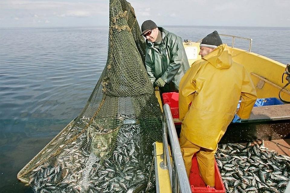 ловля рыбы сетями на чудском озере