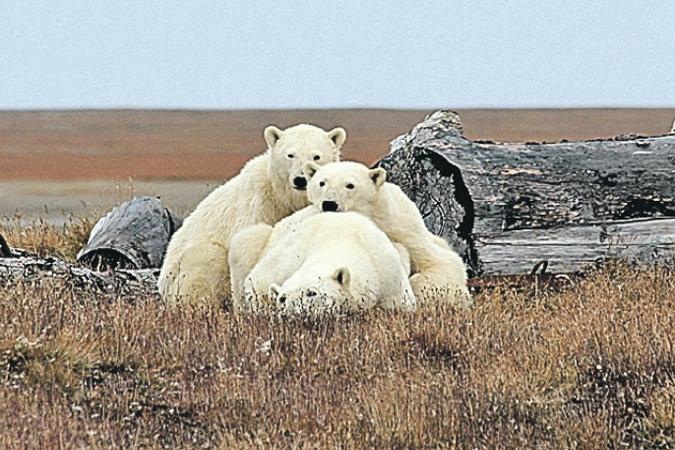 В мире наблюдается большой всплеск интереса к Арктике.