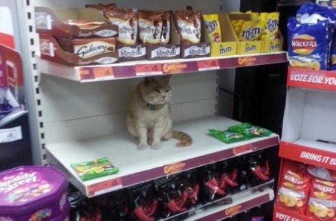 Хмурый кот Олли каждый день приходит в супермаркет. Фото:@jenny_stevens/Тwitter