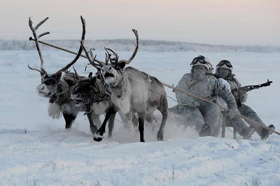 """Этим животным не страшен мороз и сугробы, они не требовательны к """"топливу"""""""