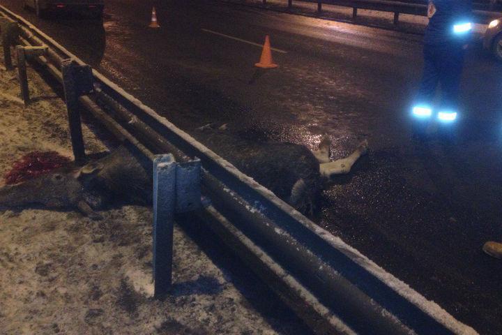 Животные гибнут, выскочив под колеса авто Фото: соцсети