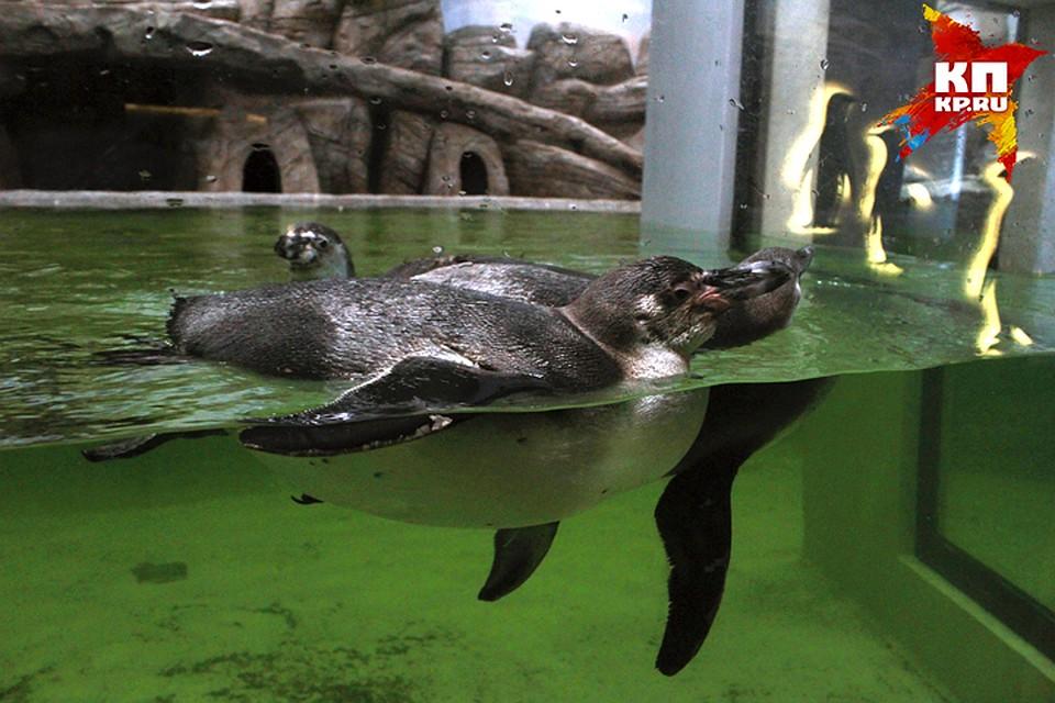 Дельфинарий вНовосибирске откроют вконце лета