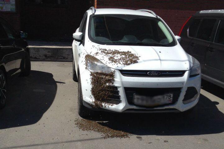 Пчелы нашли теплое местечко Фото: Анастасия Дзарасова (ДТП и ЧП)