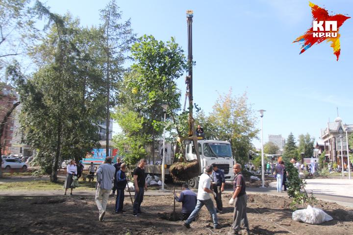 На «Купеческом» сквере вИркутске высадили больше сотни деревьев