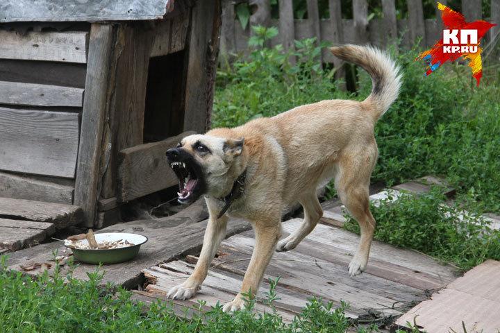 В Речице милиционер застрелил собаку, которая на него набросилась
