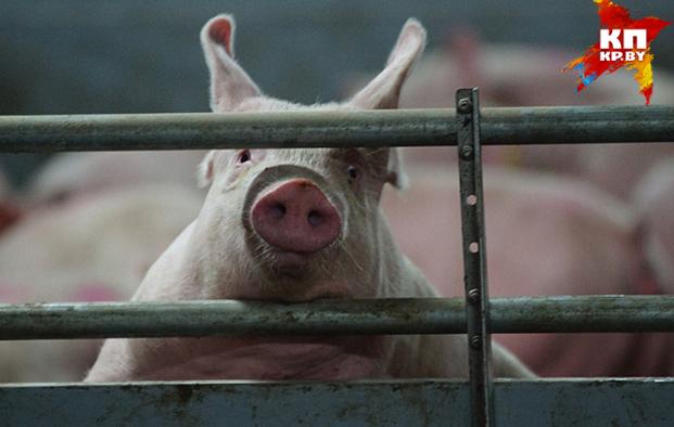 Власти Румынии приняли эту меру после того, как в Молдове подтвердились случаи африканской чумы свиней.