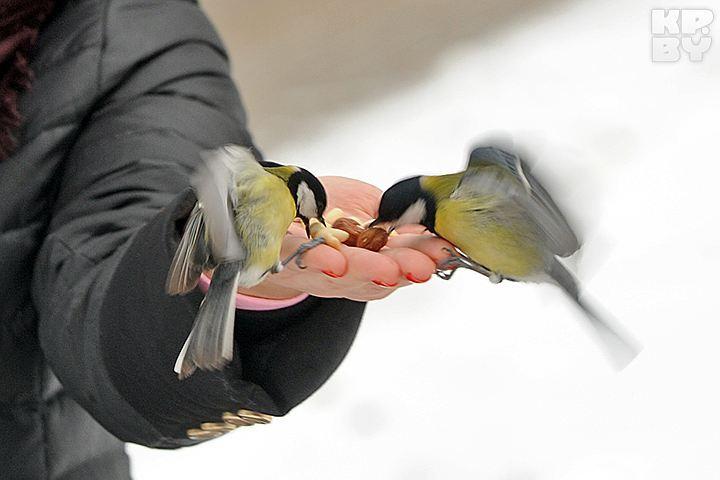 «Птички врукавичке»: вПетербурге состоится выставка певчих идекоративных птиц
