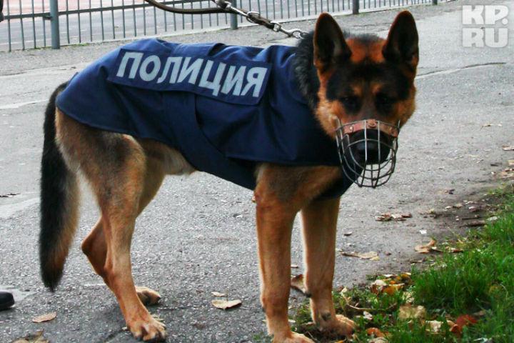 Собака взрывчатых веществ не учуяла