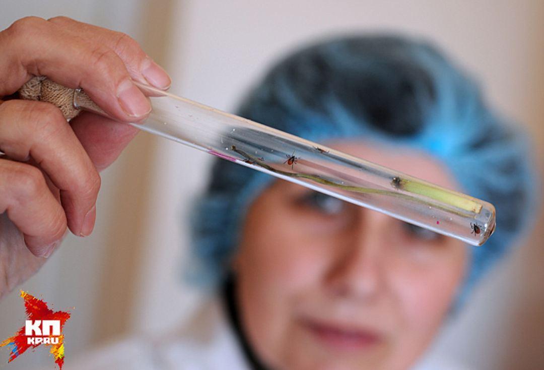 ВАлтайском крае началась вакцинация против клещевого вирусного энцефалита