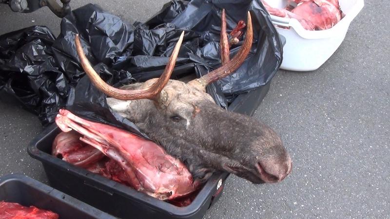 Неменее 300кг мяса диких животных отыскали убраконьера вКалининграде