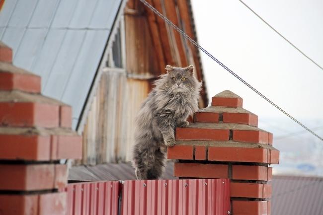 Кошка спасла владельца впожаре вМиньяре