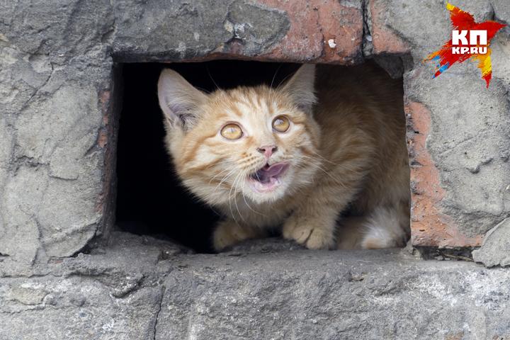 ВНавлинском районе бешеные собачка икошка покусали собственных хозяев