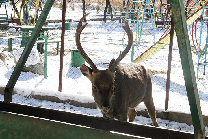 Из-за какого-то недопонимания или обыкновенной чиновничьей черствости животным зоопарка грозит голодная зима.