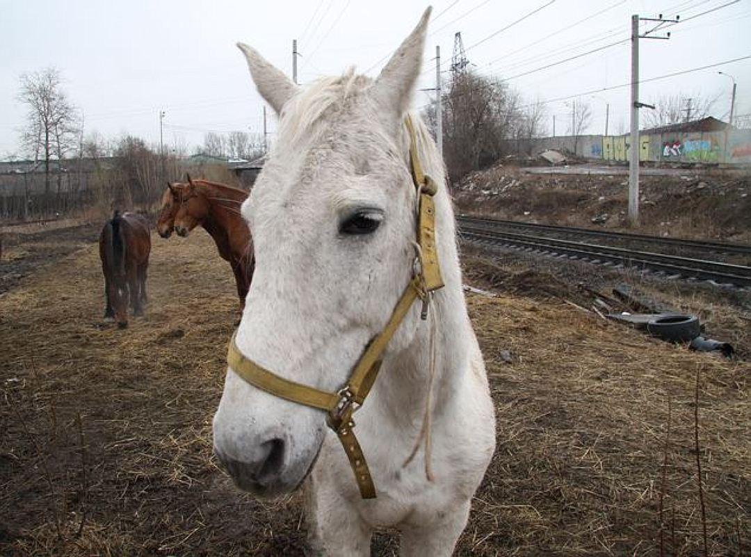 Коня удалось спасти