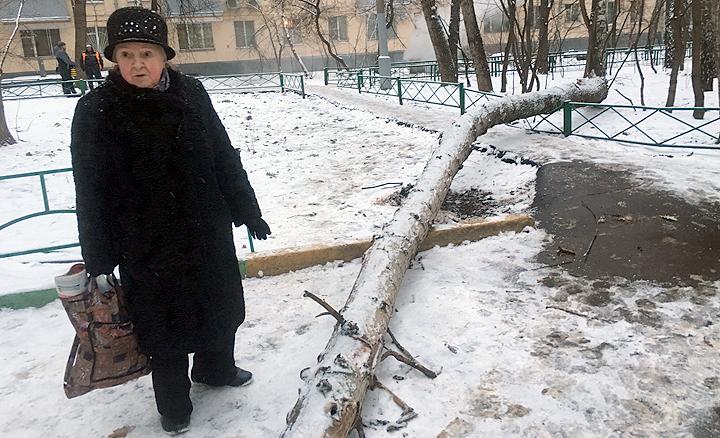 Десятиметровое дерево рухнуло на землю и убило 20-летнюю москвичку.