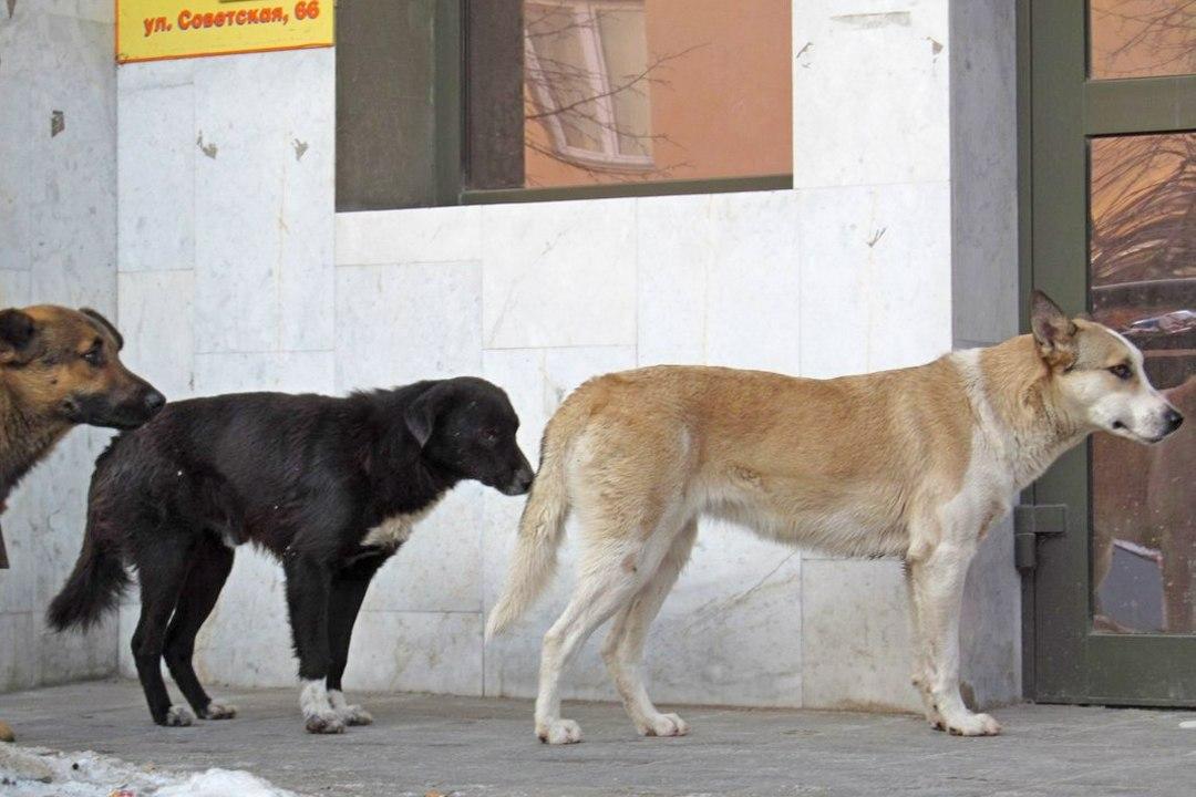 Количество случаев бешенства животных в столице России уменьшилось практически вдвое