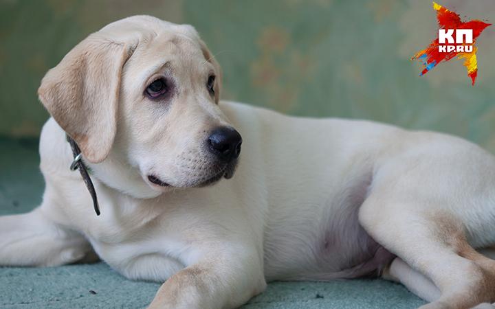 Вомской деревне, где отыскали бешеную собаку, объявили карантин